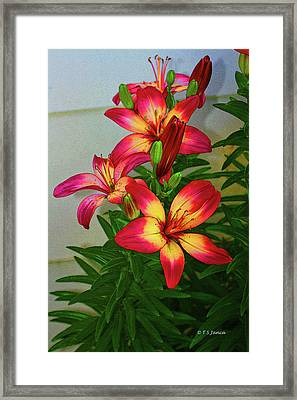 Asian Lilly Spring Time Framed Print