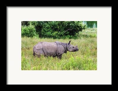 One Horned Rhino Framed Prints