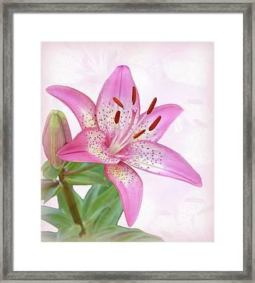 Asiatic Lily Trogon Framed Print by Sandy Keeton