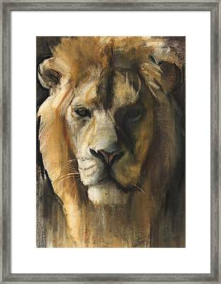 Asiatic Lion Framed Print by Mark Adlington