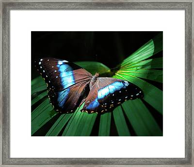 Framed Print featuring the photograph Asleep Beneath The Moon by Karen Wiles
