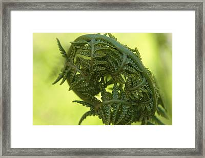 Asleep Framed Print by Connie Handscomb