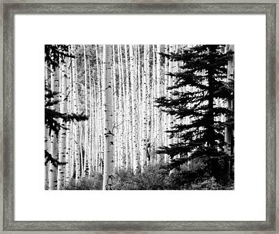 Aspen Afternoon Framed Print