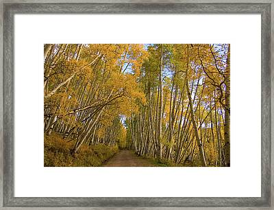 Framed Print featuring the photograph Aspen Alley by Steve Stuller