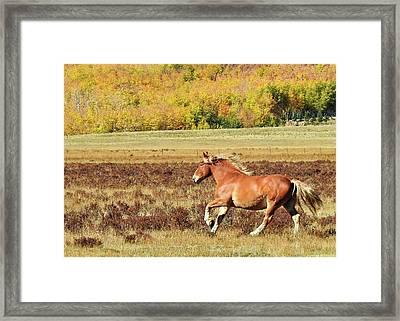 Aspen And Horsepower Framed Print