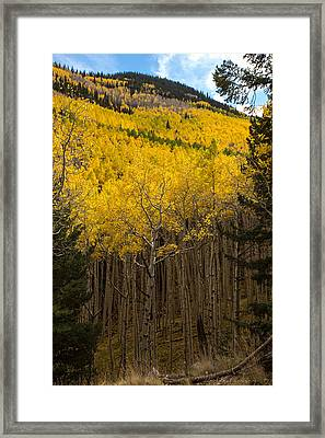 Aspen Audience Framed Print by Bill Cantey