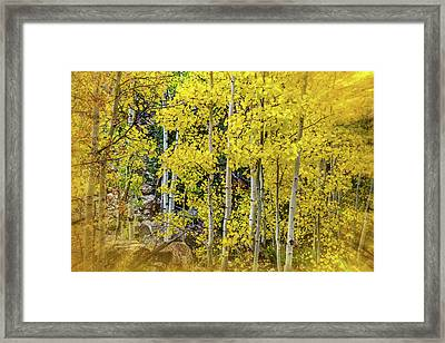 Aspen Autumn Burst Framed Print by Bill Gallagher