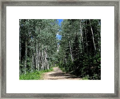 Aspen Avenue Framed Print by Feva Fotos