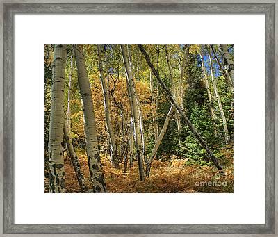 Aspen Ecosystem Framed Print