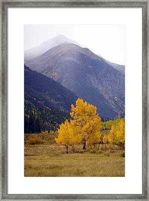 Aspen Fall 4 Framed Print by Marty Koch