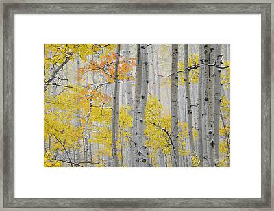 Aspen Forest Texture Framed Print by Leland D Howard