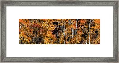 Aspen Glow Panoramic Framed Print by Leland D Howard