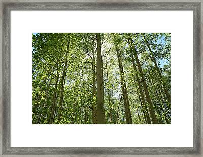 Aspen Green Framed Print