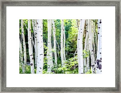 Aspen Grove Framed Print by David Millenheft