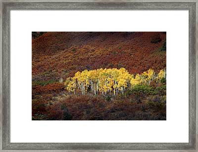 Aspen Grove Framed Print by Rich Franco