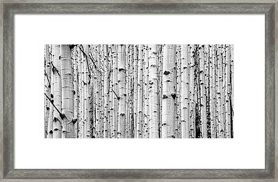 Framed Print featuring the photograph Aspen Grove by Stephen Holst