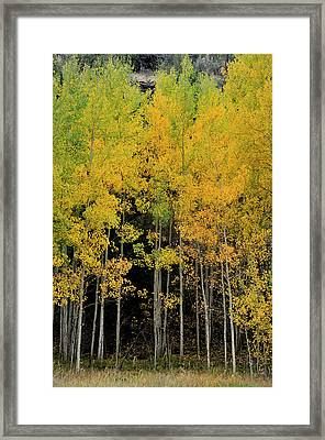 Aspen Haven  Framed Print