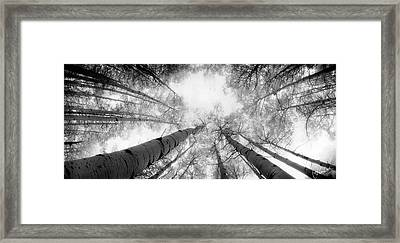 Aspen Heaven Framed Print by Christine Hauber