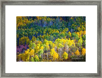 Aspen Hillside Framed Print by Inge Johnsson