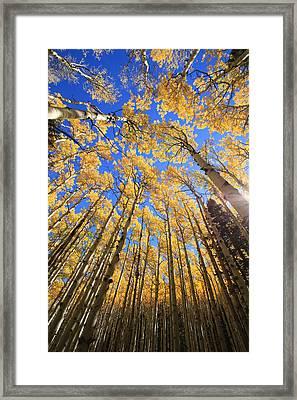 Aspen Hues Framed Print