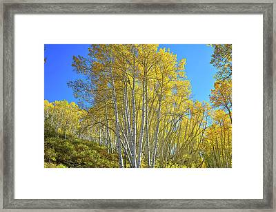 Framed Print featuring the photograph Aspen Lane by Ray Mathis