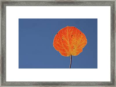 Framed Print featuring the photograph Aspen Leaf 1 by Marie Leslie