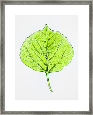Aspen Leaf - Green Framed Print