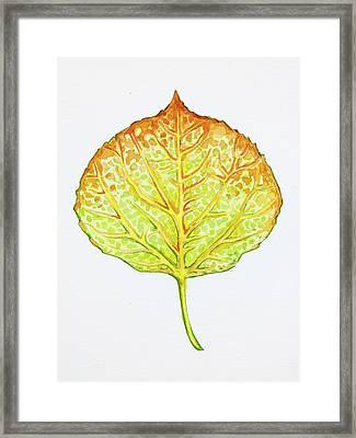 Aspen Leaf - Green And Orange Framed Print