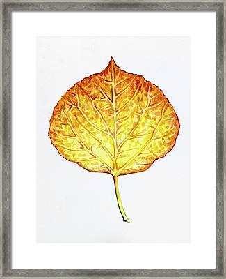 Aspen Leaf - Orange And Yellow Framed Print