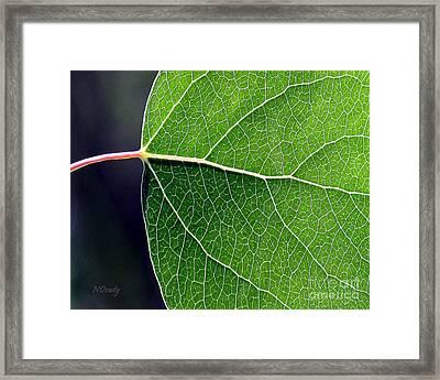 Aspen Leaf Veins Framed Print