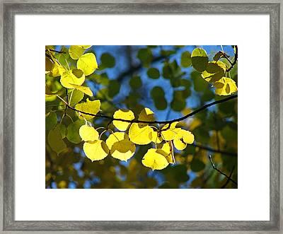 Aspen Leaves 1 Framed Print