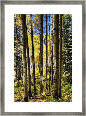 Framed Print featuring the photograph Aspen Mood - Autumn - Colorful Colorado by Jason Politte