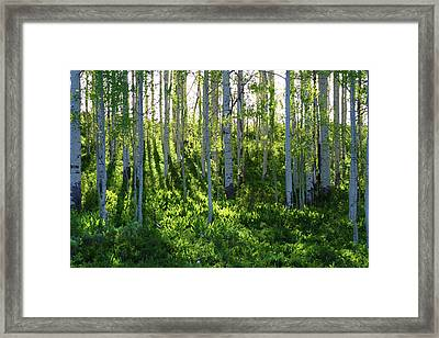 Framed Print featuring the photograph Aspen Morning 1 by Marie Leslie