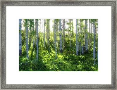 Aspen Morning 3 Framed Print by Marie Leslie