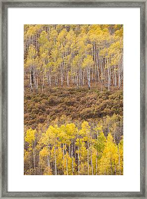 Framed Print featuring the photograph Aspen Patterns by Patricia Davidson