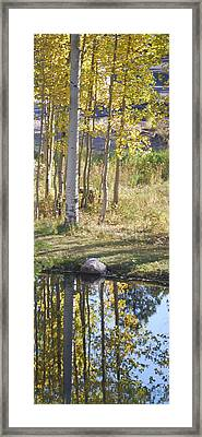 Aspen Reflections Framed Print by Billie Colson