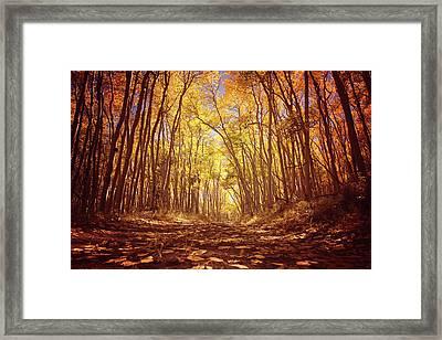 Aspen Road Framed Print