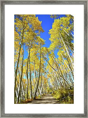 Framed Print featuring the photograph Aspen Road by Ray Mathis