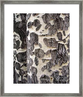 Aspen Scars Framed Print
