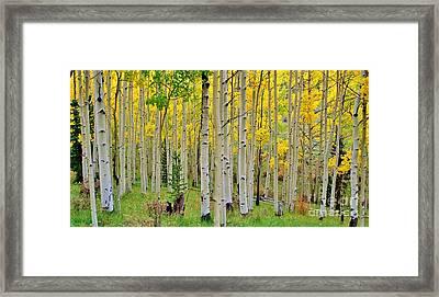 Aspen Slope Framed Print