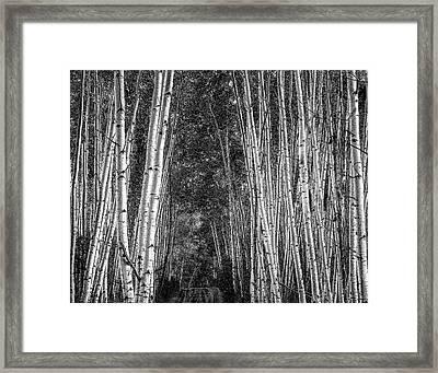 Aspen Stalwarts Framed Print