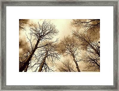 Aspen Framed Print
