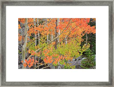 Aspen Stoplight Framed Print
