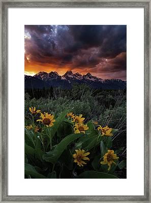 Aspen Sunflower Sunset In The Tetons Framed Print