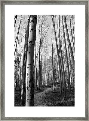 Aspen Trail Framed Print by Tobin Truslow