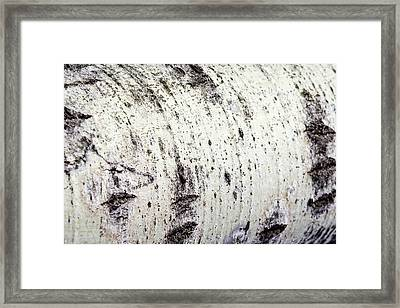 Framed Print featuring the photograph Aspen Tree Bark by Christina Rollo