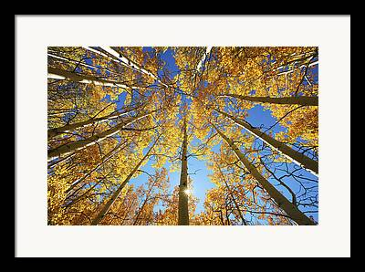 Deciduous Tree Framed Prints
