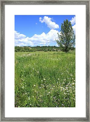 Aspen Tree In Meadow With Wild Flowers Framed Print by Jim Sauchyn