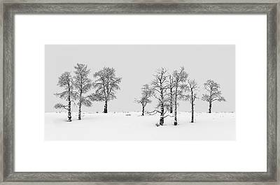 Aspen Tree Line-up Framed Print