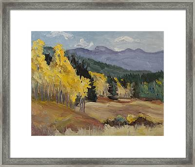 Aspen Tree Splash Of Fall Steamboat Springs Colorado Framed Print